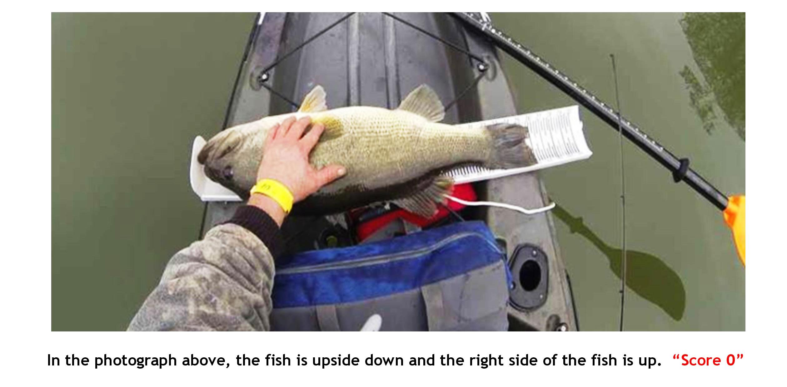 fish-5-upside-down